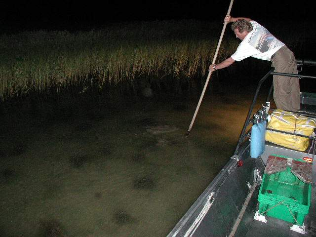 Nightstalker guide service flounder gigging in rockport for Fish gigs for sale